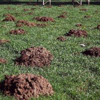 Mole Damage - Mountainous Mole Hills